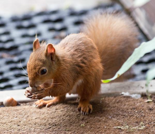 I love my nuts by johnbushell
