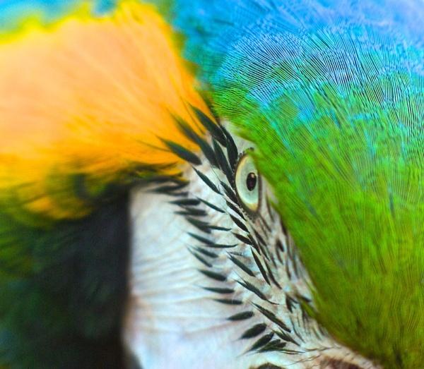 Pretty Polly\'s Evil Eye by Cobbage