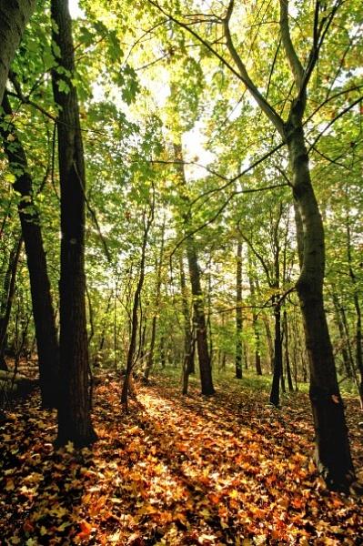 Droversdale woods. by kevdarke
