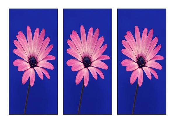 Flower by airfreq
