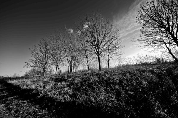 Harlow park by stevedigip