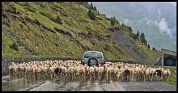 Shepherd Wanted!