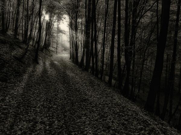 Autumn light by megpie60