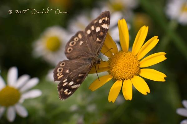 In the garden by DanielD