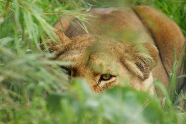 Im watching you!!!! by Jen10