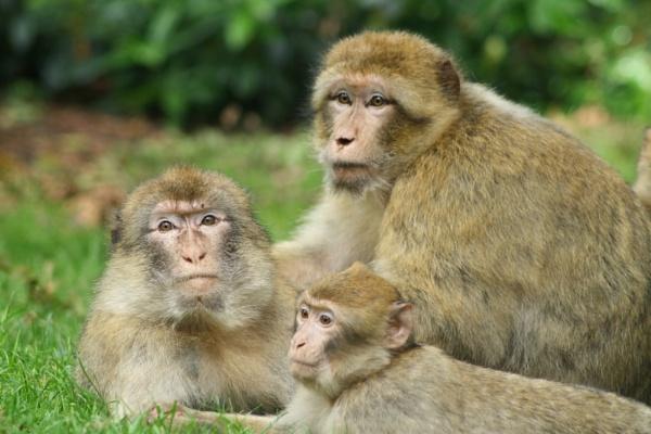 monkey family by lez68