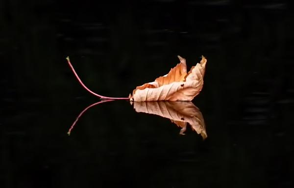 leaf reflection. by DCox