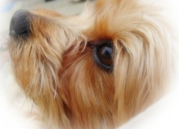 dog.... not biting me (always a bonus) by MisterGrimshaw