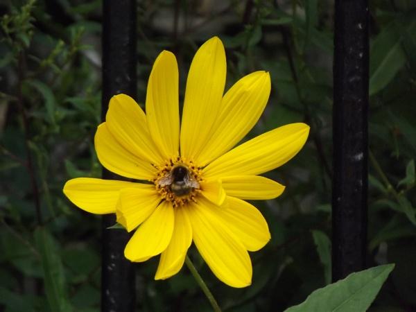 Bee-autiful by bonkers2000