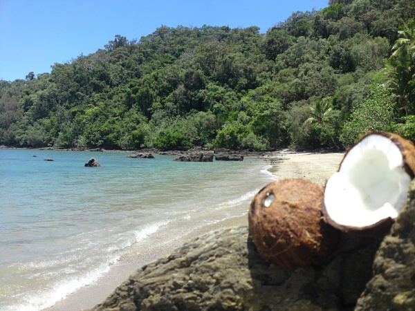 Coconuts by Spence11