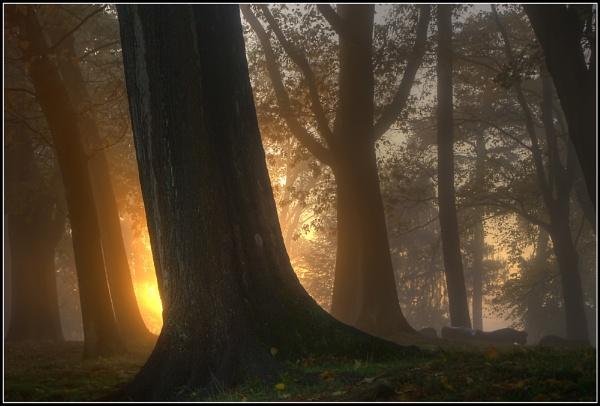 Sunrise by PEELO