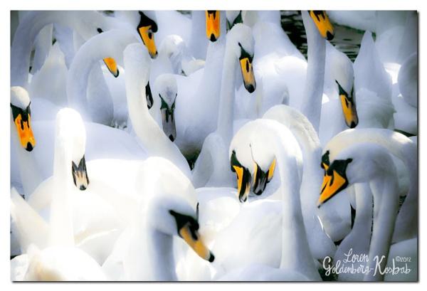 Swan Lake by Leilani