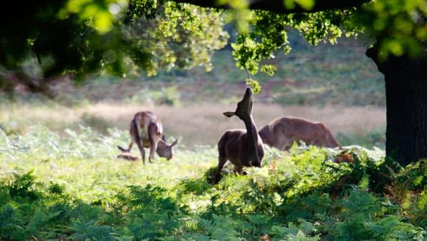 Deer Food by StephenBrighton