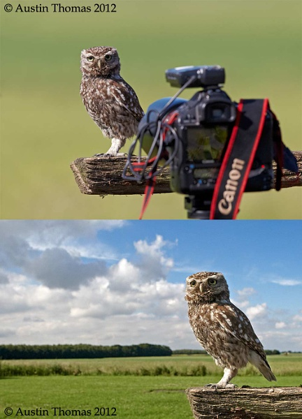A wide angle Little Owl image and a photo of the setup. by Austin_Thomas