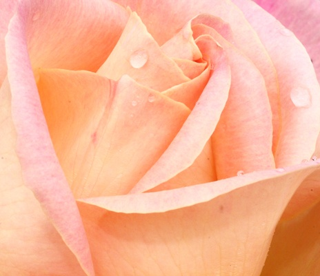 Raindrops on roses by ANW