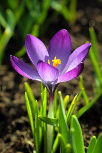 Purple pleasure by ian9106