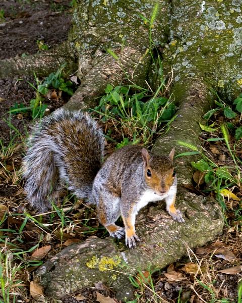 "31-08-12 \""Squirrel Park.\"" by Jestertheclown"