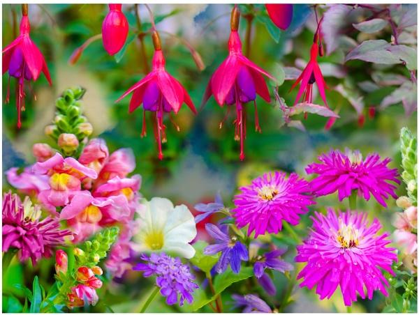 Summer Garden by ElaineGregg