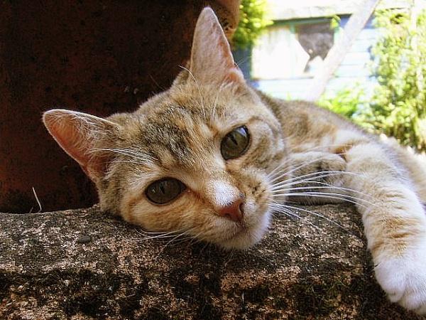 titchy cat