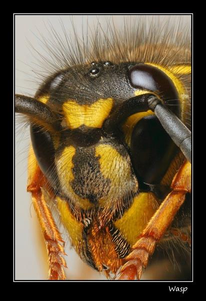 Wasp by Ade_Osman