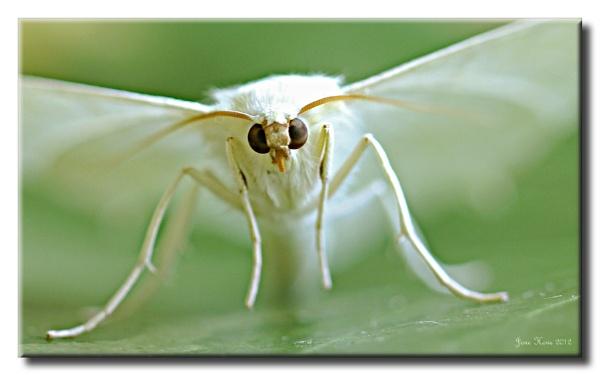 Mystic Moth by Snapitt