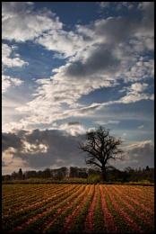 Shropshire Skies