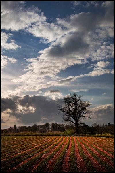 Shropshire Skies by Niknut