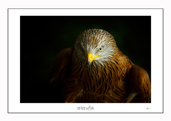 Red Kite by marathonman2