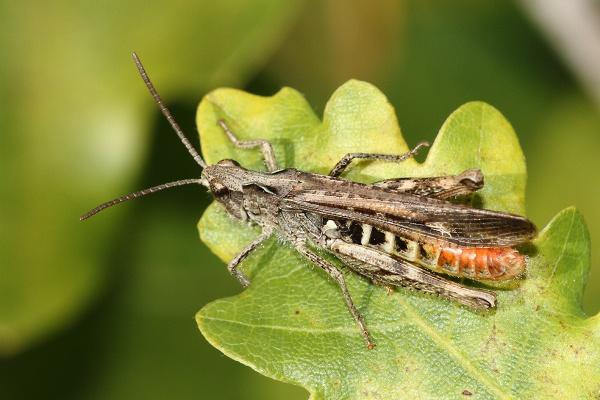Grasshopper by Metro6R4