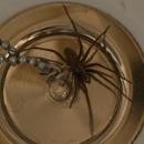Spider in my bath.