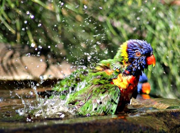 Bird Bath by JoDraper