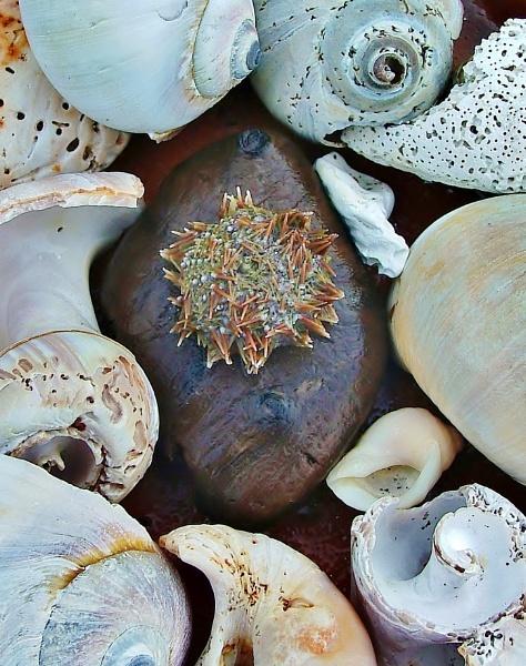 shells by cptdaniel