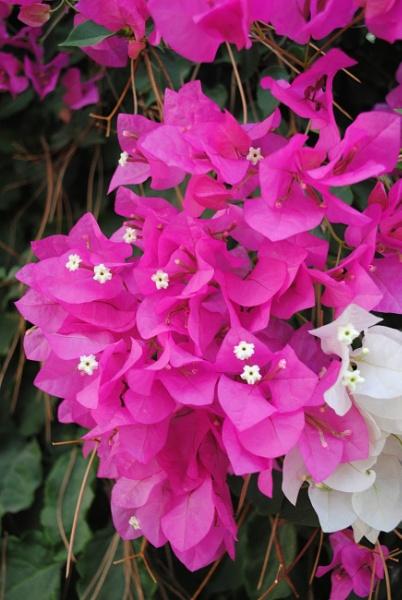 Flowers from Turkey by elainebaker