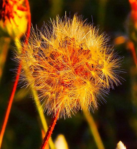 A csillag fénye by wacrizphoto