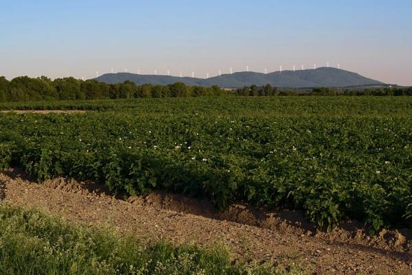 Potato fields by Joline