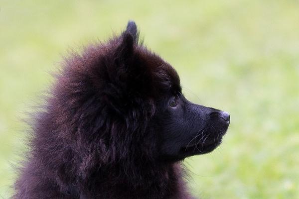 Dog by JohnM24