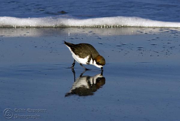 Little Bird by Phillb