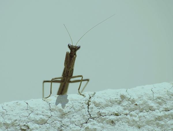 Wall surveyor... by Chinga