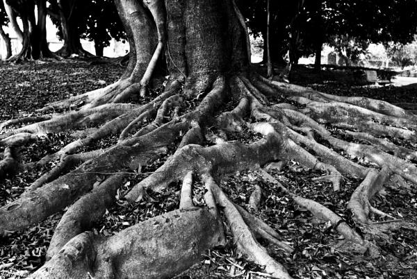 Roots by DitoInacio