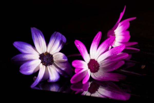 3 Little Flowers by Ashley102