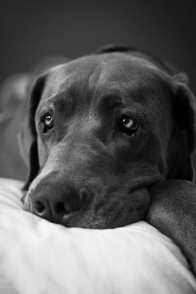 Sleepy Dane by Ashley102