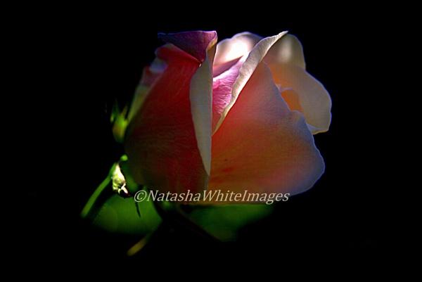 timeless beauty by nat1153