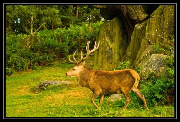 Red Deer under the rocks by dhandjh