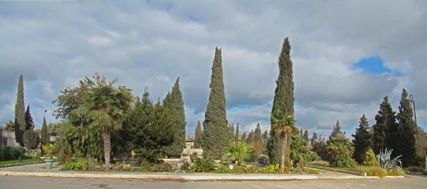 mardakan arboretum 187 b by MAKRADA