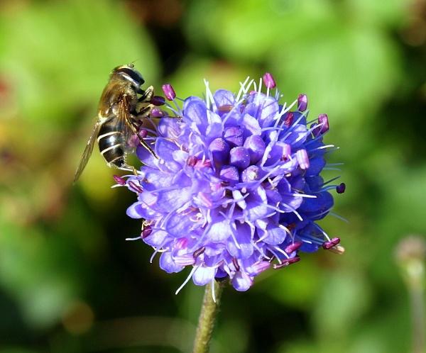 The Busy Bee by carpmanstu