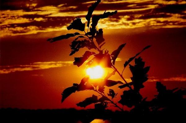 sunset by blkwolf007