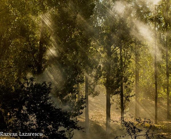 about light - part II by razvanesqu