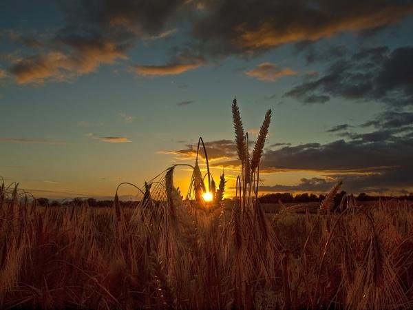Summer\'s harvest by kenfoulds