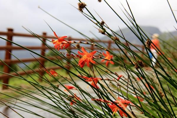 wild flowers walking the gap of dunloe by nac