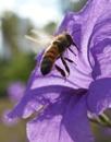 Bee In Flight by Scottelly